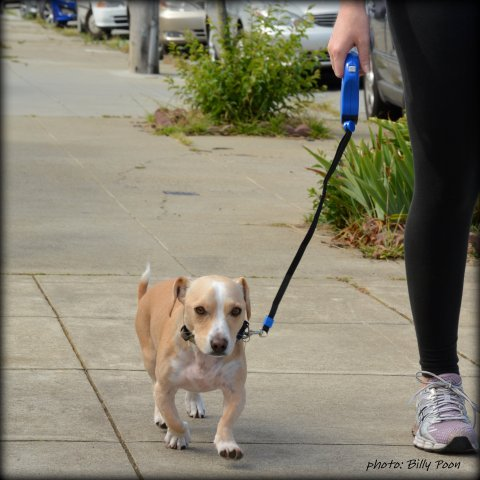 6 Rules for Using Retractable Leashes