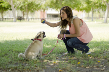 Top 5 Reasons Dog Training Benefits the Owner