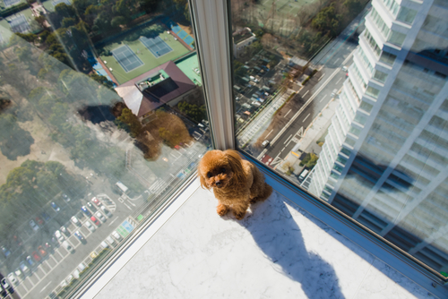 "How Friendly is that ""Pet-Friendly"" High-Rise, Really?"